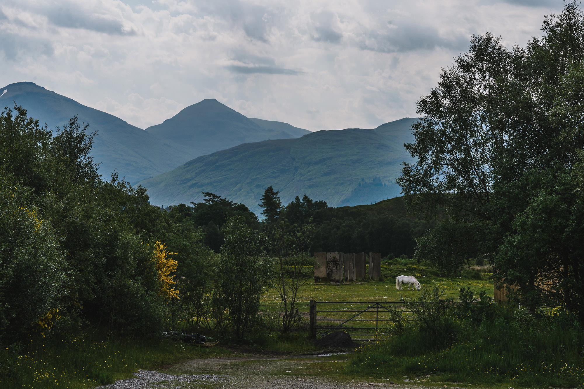 white horse with mountains in background