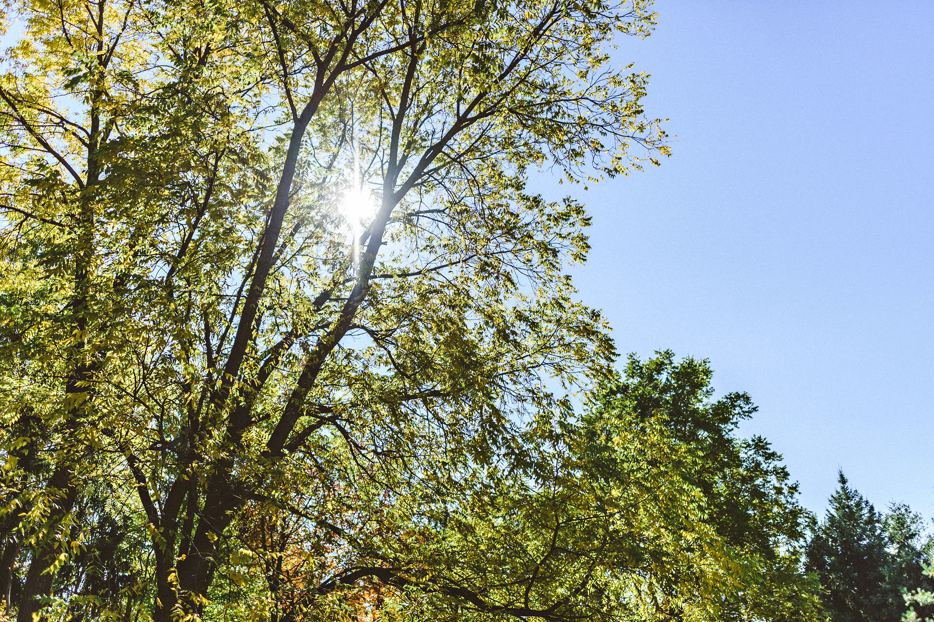 beautiful niagara trees