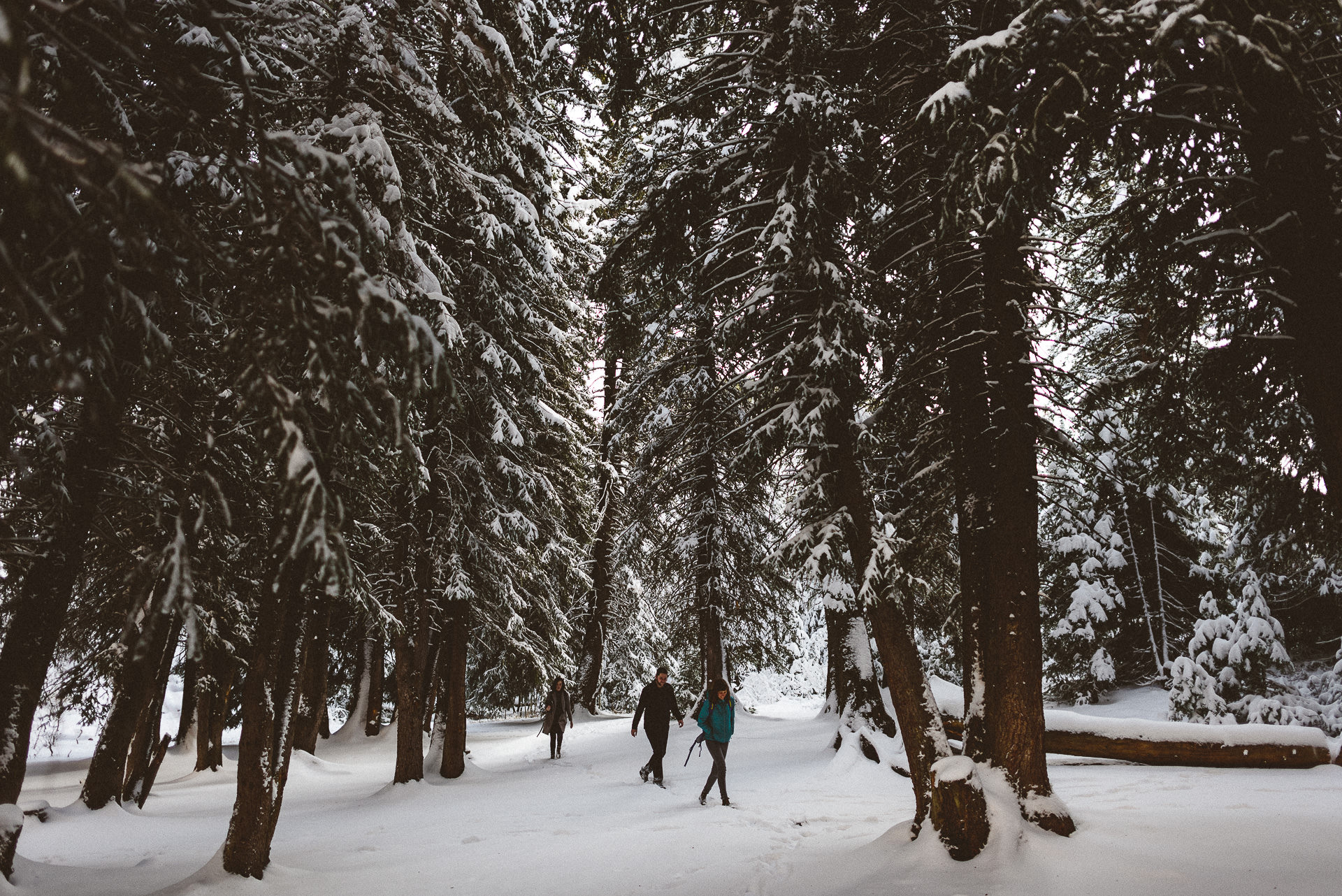 people walking in tall snowy trees in big cottonwood canyon